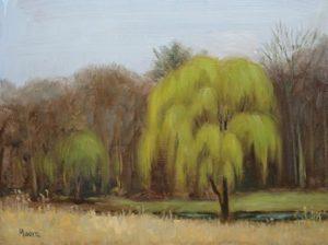 Willow at Fish Hatchery, Emmaus, PA, 11x14